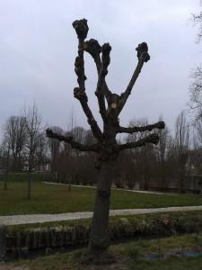 arbre totem